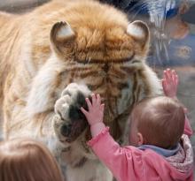 save me tiger1