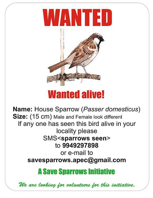 save sparrow