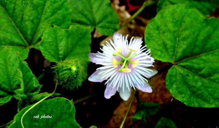 A flower in Concrete Jungles of Chennai