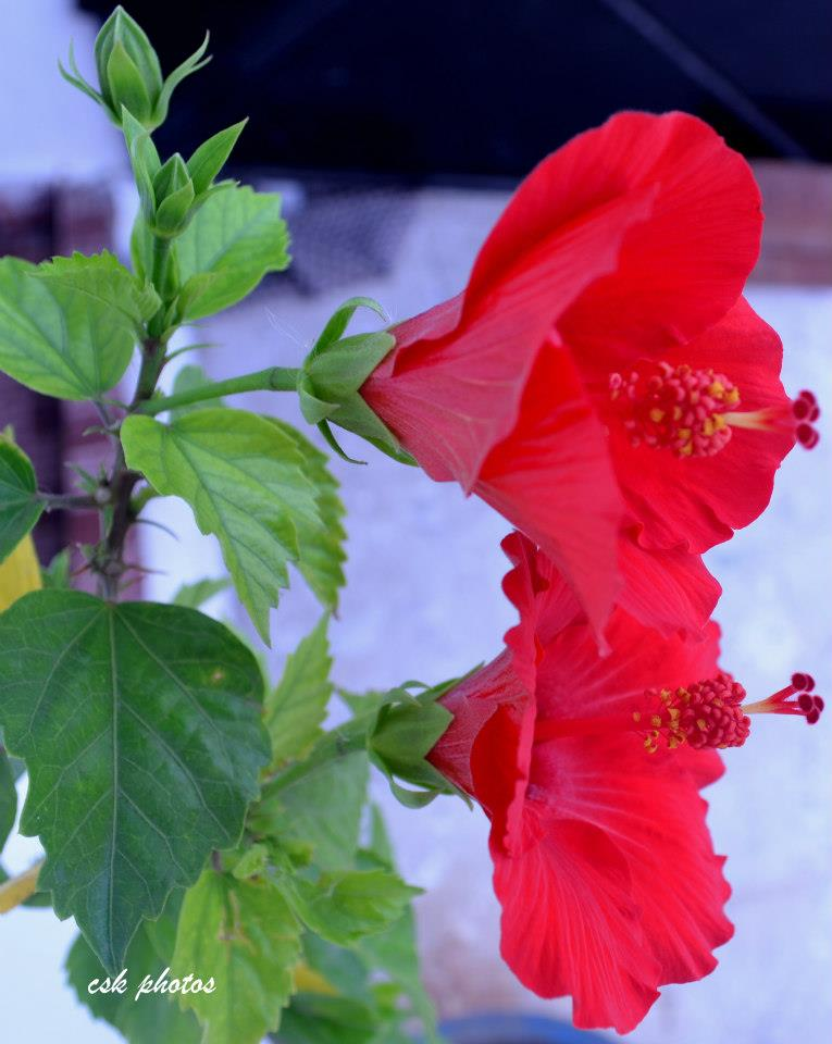 Flowers from Concrete Jungles of Chennai