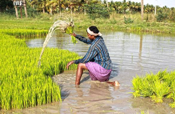 Image result for kisan