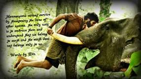 Survival Truth