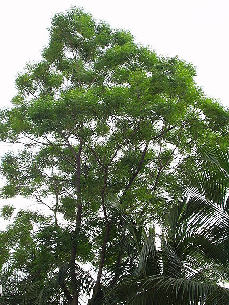 Know : List of Plants – A