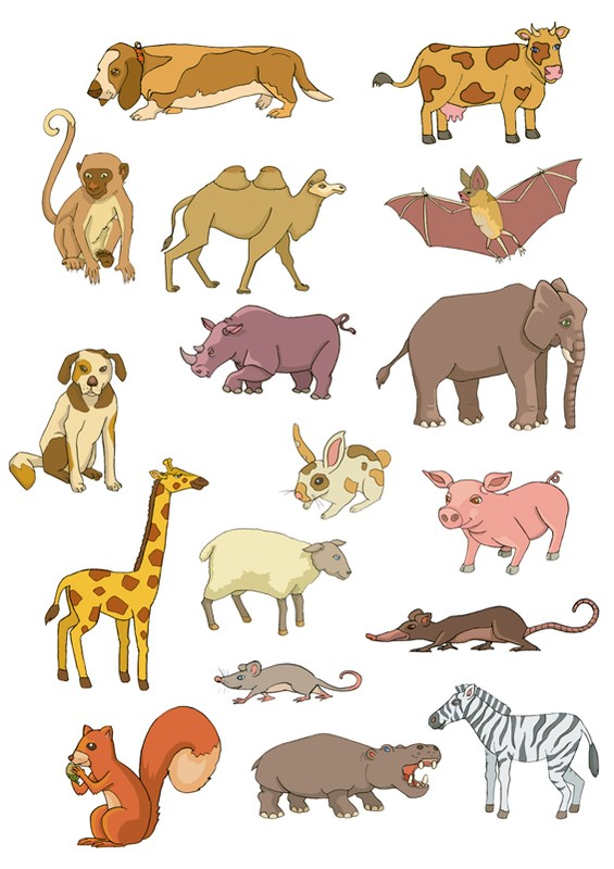 Know : Life Span of Animals : List