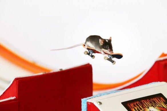 Skate Mice (1)