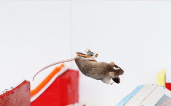 Skate Mice (10)