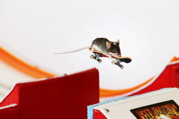 Skate Mice (12)