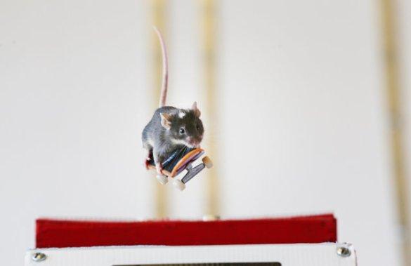 Skate Mice (13)