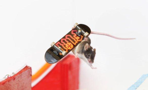 Skate Mice (2)