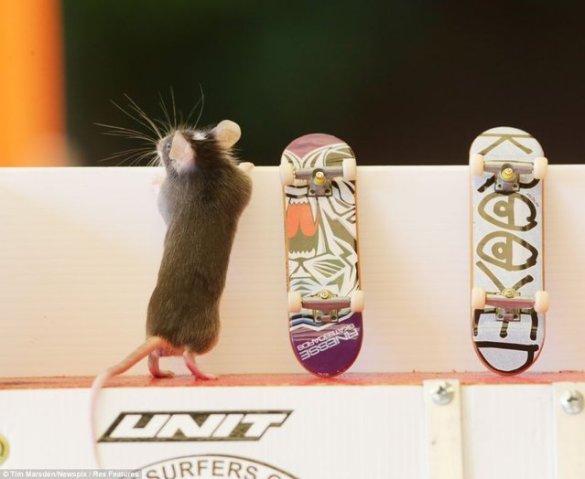 Skate Mice (3)