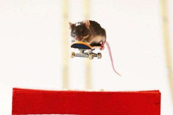 Skate Mice (4)