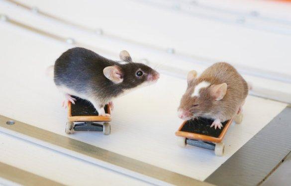 Skate Mice (5)