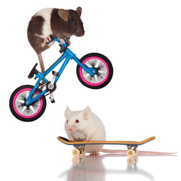 Skate Mice (6)