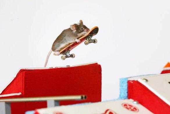 Skate Mice (7)