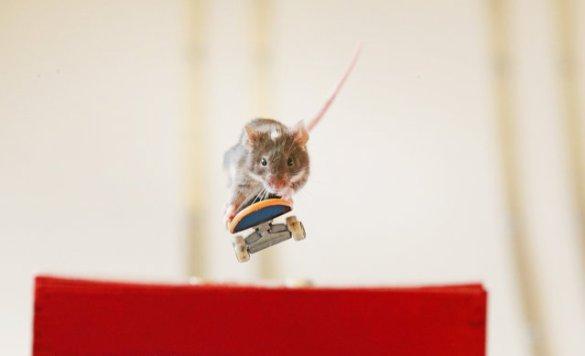 Skate Mice (8)