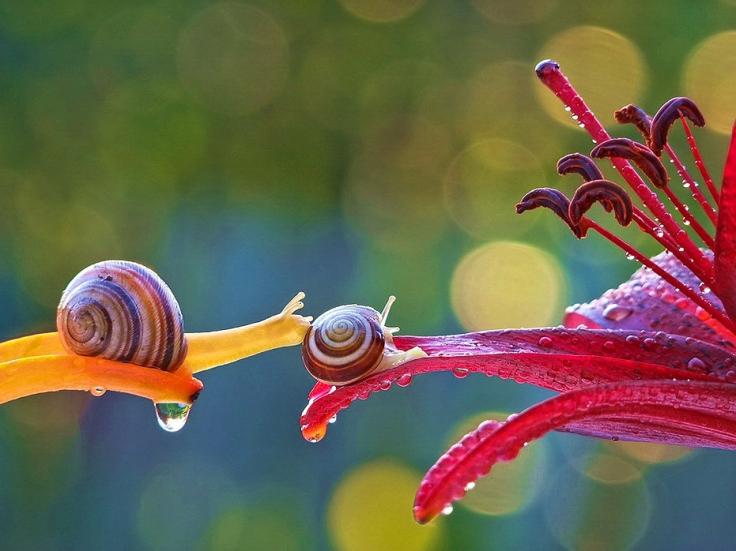 Snail (4)