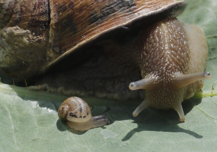 Baby Snail and Snail