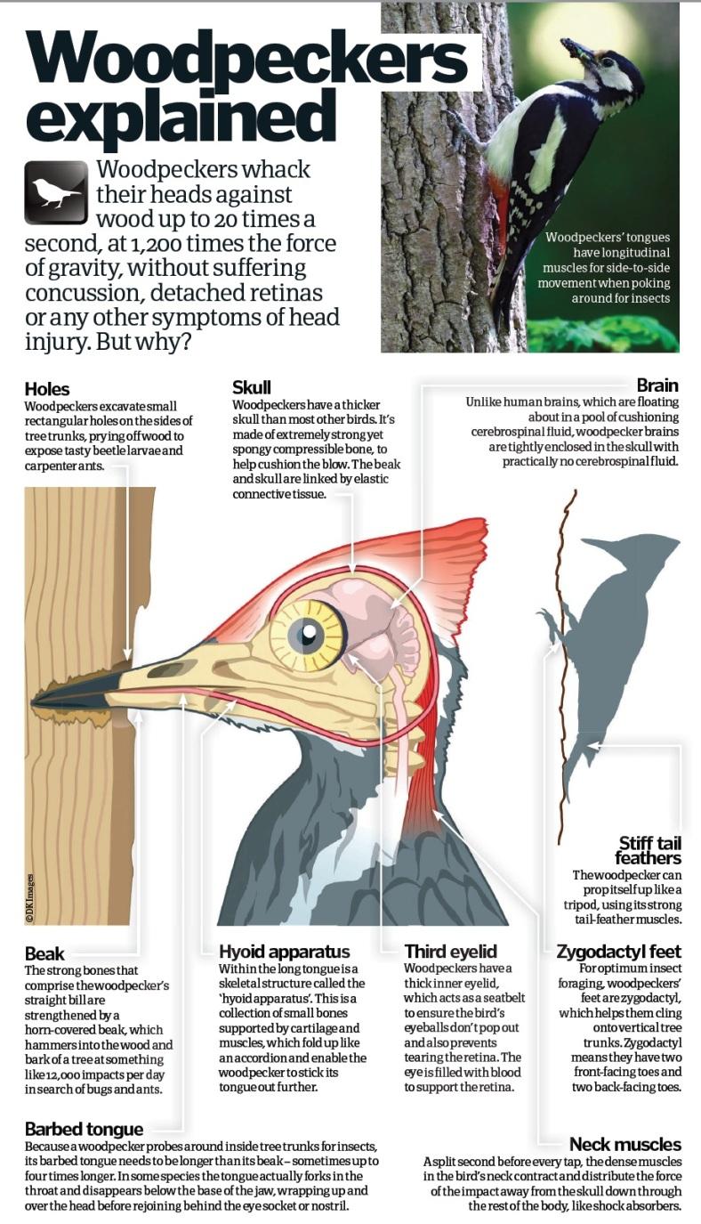 woodpecker in slow motion gifs