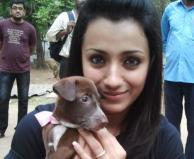 Actress Trisha adopting a dog