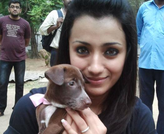 Actress Trisha adopting a dog