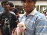 A Gentleman adopts an Indian Dog