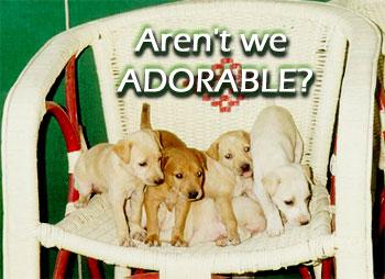 adopt_puppies4_2
