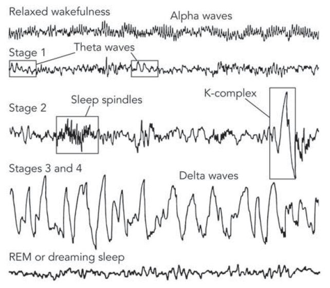 Brain Waves Brain Wave Patterns During