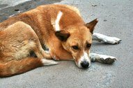 Homeless street dog