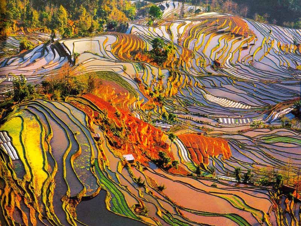 Eco preservation the longsheng rice terraces propel steps for 100 rice terrace drive columbia sc