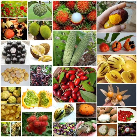 Exotic Fruits 15