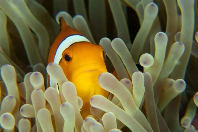 Another Nemo