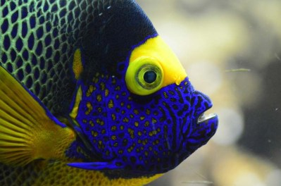 Tropical Fish Profile