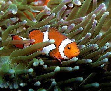 cloen fish