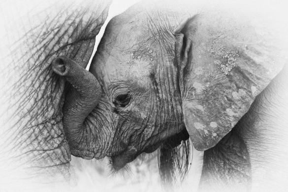 Save Elephants! Leave forests for them. It's their home.