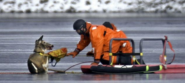 Boston area firefighters try to rescue a deer stuck on ice.