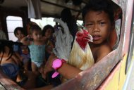A boy holds a rooster as he and his family members who are affected by Typhoon Haiyan wait for his bus to leave the city in Tacloban, central Philippines, Wednesday, November 13, 2013. (Photo by Dita Alangkara/AP Photo)