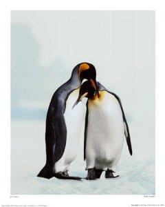 penguins_in_love