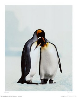 penguins_in_love