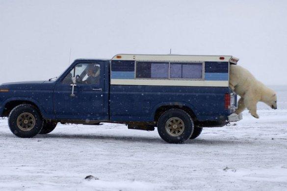 Polar B (1)