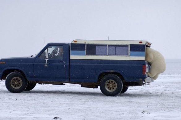 Polar B (2)