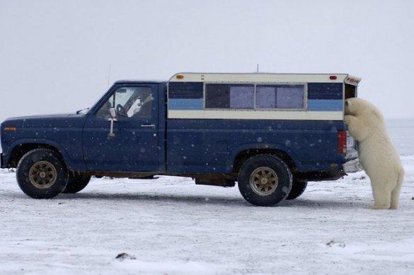 Polar B (3)