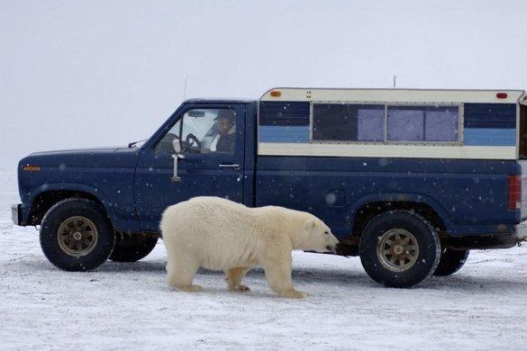 Polar B (4)