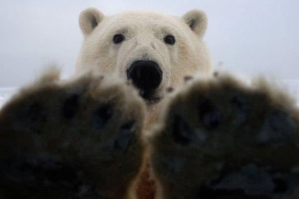 Polar B (6)