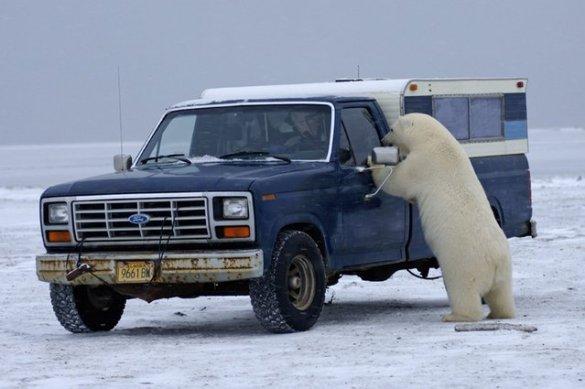 Polar B (7)