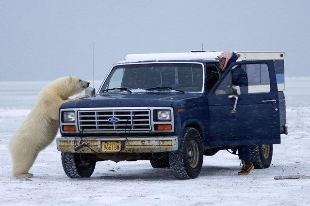 Polar B (8)