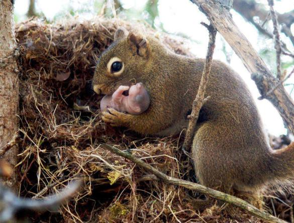 Though its her child, you really do not know how tough it's for a squirrel to bring up