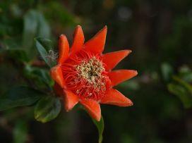 Flower after Fertilization