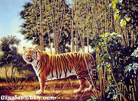 hidden-tiger