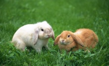 cute-rabbit-10