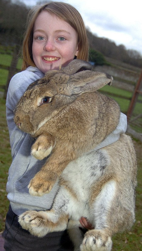He is Ralph, claimed as world's largest Rabbit :)